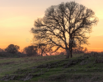 Sierra Foothills—Sunset over the Foothills, Perspective 1