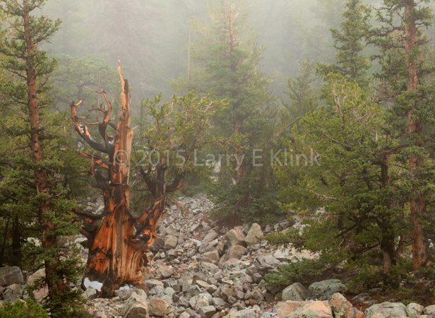 Great Basin National Park, NV, OCT 2015