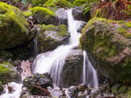 Mt Tamalpias Watershed, Marin County, CA, JAN 2016