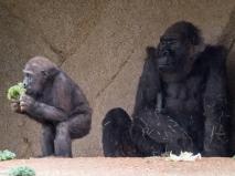 San Diego Zoo Safari Park, MAR 2016