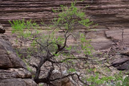 Grand Canyon National Park, MAY 2016