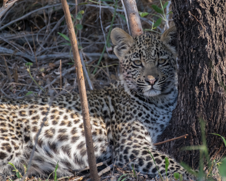 Karula's Unnamed Cub