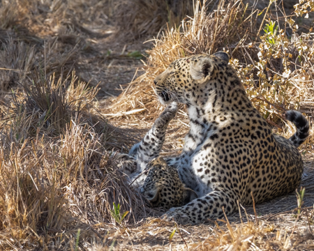 Karula with Unnamed Cub