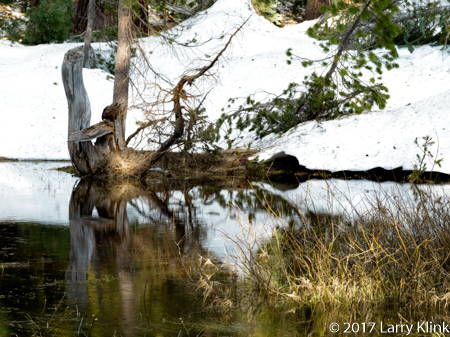 Image of a tree stump reflected in a pond. Glacier Point Road, Yosemite National Park, MAY 2017
