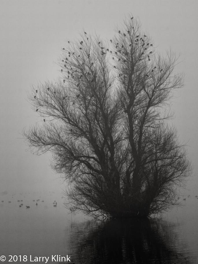 Birding on a Peaceful, Foggy Morn