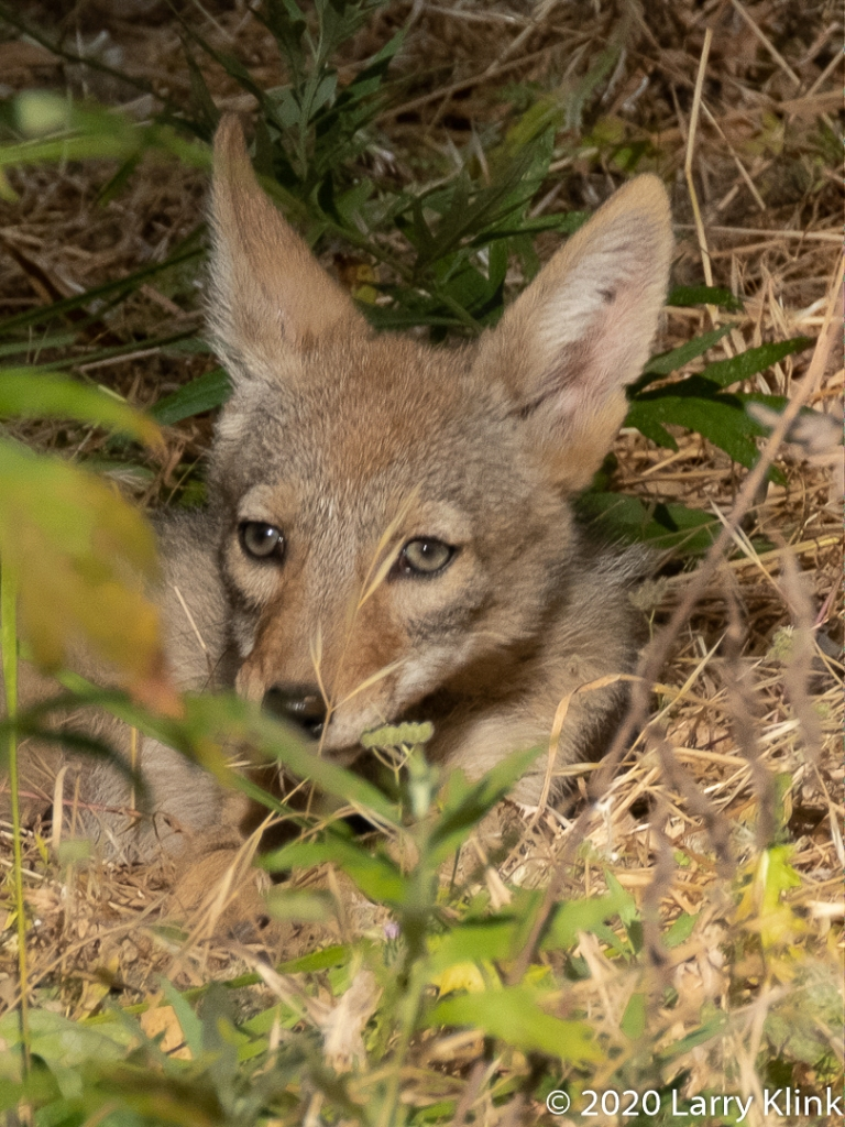 Photographic images of some wildlife found in the Sacramento, CA area.