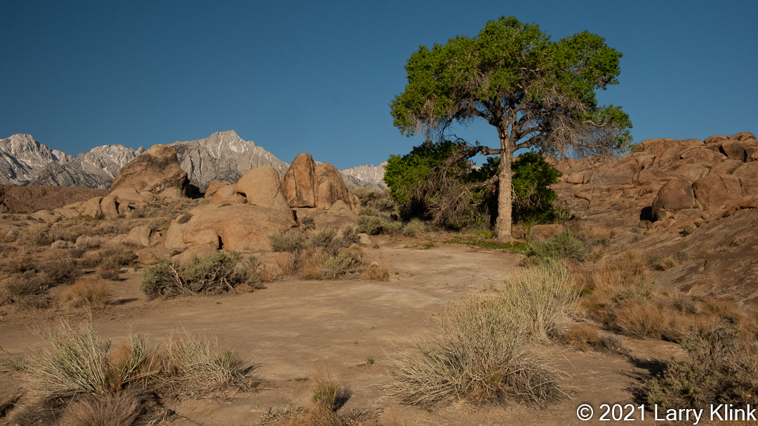 Image of a shade tree along a path in a desert area of the Alabama Hills